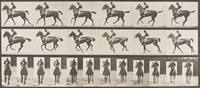 """""""Annie G."""" Cantering, Saddled"""