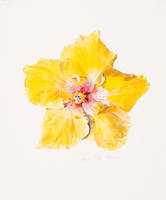 Yellow Hibiscus Blossom