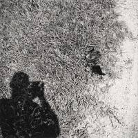 Untitled [photographer's shadow, feathers on grass]