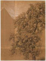 Tree Study - Gummersbach